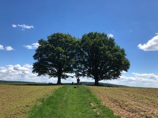 7 gewoonten om Mindfulness in je leven te integreren Heilige boom