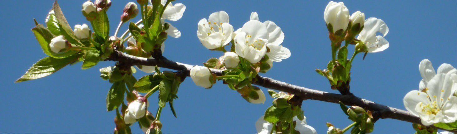 Leren als Bloesem te zijn; fijn, kwetsbaar en zo krachtig in groei en bloei