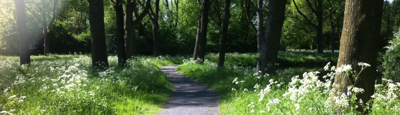 de weg vinden; je eigen weg gaan, je pad vinden